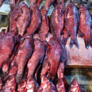 ماهی شور روناسی